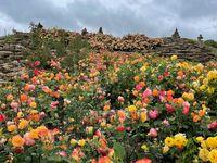 Der Rosenberg in voller Blütenpracht.  Bild: Schloss Dennenlohe Fotograf: Schloss Dennenlohe