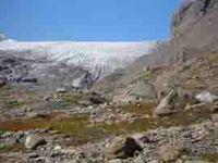 Leben im Paläolithikum: Nach dem Abschmelzen der Gletscher besiedelten zunächst Pionierpflanzen das Schweizer Mittelland – so wie hier am Gletscher Tsanfleuron Quelle: Foto: Werner Müller (idw)
