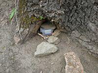 Baumwurzelversteck eines Geocaches