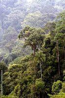Der Bukit Tigapuluh Nationalpark - eine der letzten Gegenden auf Sumatra, in denen es noch intakten Urwald gibt. / Bild: greenpeace.de