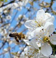 Bild: Verena N. / pixelio.de