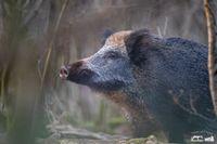 Bild: Timo Litters, Wildtierschutz Deutschland
