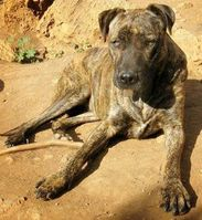 Amadeus ist seit Okt. nordöstl. von Augsburg unterwegs - nur einer von vielen verirrten Hunden Bild: Agentur Leseziel Andrea Reichart (openPR)