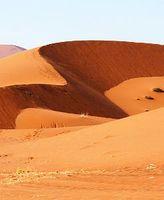 Mehrmals bedeckten Wälder die Sahara. Bild: pixelio.de/Schütz