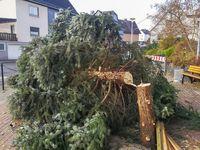 Unbekannte fällen Weihnachtsbaum in Dillenburg-Frohnhausen - Wer kann Angaben zu den Tätern machen? Bild: Polizei