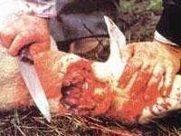Schächten = Töten eines Tieres durch Ausbluten ohne jegliche Beteubung
