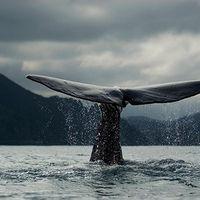 Bild: WWF