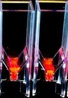 Fluoreszierende Mikroalgen werden im Labor untersucht.