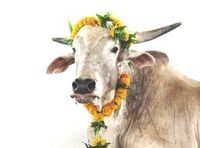 Bild: PETA India