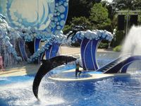 Sea World Show: Blue Horizons (Whale & Dolphin Theater)