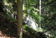 Wald Quelle: Quelle: Universität Freiburg (idw)