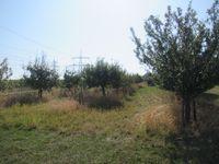 Abgeerntete Obstbäume