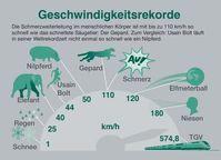 """Die Schmerzweiterleitung im menschlichen Körper ist mit bis zu 110 km/h so schnell wie das schnellste Säugetier: Der Gepard. Bild: """"obs/Bayer HealthCare Deutschland"""""""