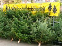 Weihnachtsbäume: Die (Teil-)Tradition einen lebenden Baum zu töten und ihm einige Wochen lang zuzuschauen wie er endgültig stirbt...