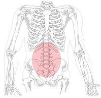 Hexenschuss: Hervorgehoben sind die fünf Wirbelkörper der Lumbar-Region