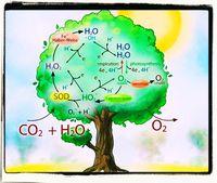 CO2 ist Nahrung der Pflanzen! Und Pflanzen produzieren Sauerstoff. Ein Kreislauf. Wer ihn zerstört, tötet das Leben auf dem Planeten (Symbolbild)