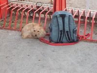 Haustier als Luxus: Mara wurde vor dem BDT-Tierheim ausgesetzt - im Rucksack ihr Spielzeug und ein schriftlicher Hilferuf.obs/Bund Deutscher Tierfreunde e.V.