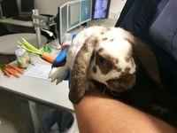 Kaninchen Bild: Polizei