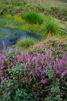 Moore sind die Schwämme der Natur: Sie schützen vor Überflutungen bei starken Regenfällen und als Wasserspeicher für heiße und trockene Sommer.
