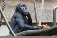 """Bild: """"obs/Verband der Zoologischen Gärten (VdZ)/Grüner Zoo Wuppertal"""""""