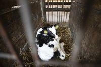 Bild: Compassion in World Farming