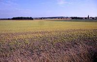 Roundup-Einsatz auf einem Acker nördlich von Dresden. Bild: Holscher / de.wikipedia.org