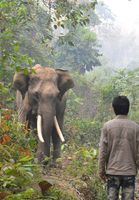 Myanmar: Elefanten helfen bei der Holzarbeit.