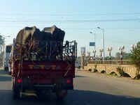 Tiertransport in Ägypten. Bild: Jerzy Sawluk / pixelio.de