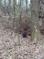Bei dem offensichtlich entlaufenen Tier handelt es sich um ein sogenanntes Benneton-Känguru.