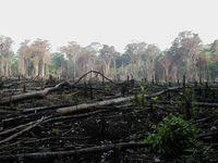 Abholzung: Brandrodung zur Gewinnung landwirtschaftlicher Flächen in Mexico
