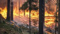 Waldbrand (Symbolbild)