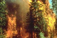 Ein Waldbrand in Kalifornien, 5 September 2008 (Symbolbild)