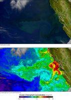 Phytoplankton im aufströmenden nährstoffreichen Wasser vor der Küste Kaliforniens