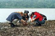 Sammeln von Bodenorganismen an der Lagune Foto: ZMT
