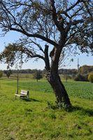 Baum: Er wappnet sich für schlechte Zeiten. Bild: pixelio.de, Dieter Braun
