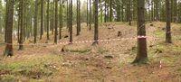 Ausgrabungsareal von 2011 auf dem Kamm des Harzhorns. Foto von 2012, ein Jahr nach den Untersuchungen.