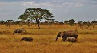 Tansania Elefantenfamilie