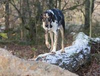"""Hunde, die sich das ganze Jahr im Freien bewegen, sollten 365 Tage im Jahr gegen Zeckenbefall geschützt werden. Bild: BfT/Klostermann / obs/Bundesverband für Tiergesundheit e.V."""""""