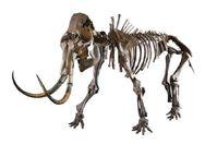 "Mammutskelett ""Lena"". Bild: ""obs/©Catawiki"""