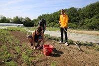 UW/H-Studierende beim Gemüseanbau Quelle: UW/H (idw)