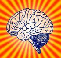 Gehirn: Dehnt sich bis zum 60. Lebensjahr bei Bedarf.
