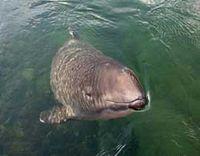 Bild: Gesellschaft zur Rettung der Delphine e.V.