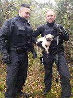 Mops aus Bockhorn Bild: Polizei