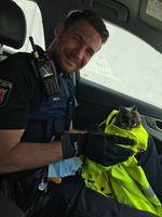 Verletzte Eule gerettet Bild: Polizei