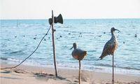 Am Strand von Velika Plaza in Montenegro werden Dünnschnabel-Brachvögel als Lockvögel aufgestellt. Dabei wurde die seltene Art seit 2005 nicht mehr gesichtet. Bild: EuroNatur
