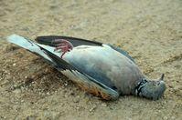 "Bild: ""obs/Komitee gegen den Vogelmord e.V."""
