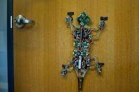 """""""MicroTug"""": Roboter ist Tier nachempfunden. Bild: bdml.stanford.edu"""