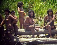 Noch nie zuvor wurden unkontaktierte Indianer aus dieser Nähe aufgenommen. © D. Cortijo/Survival Bild: Survival International Deutschland e.V. (openPR)
