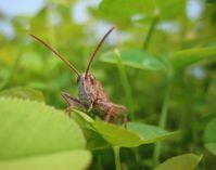 Evolutionsbiologen der Universität Bielefeld untersuchen, wie Insekten auf Umweltlärm reagieren. Quelle: Foto: Ulrike Lampe (idw)