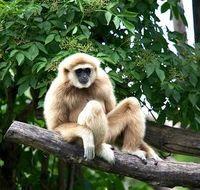 Affe: Forscher müssen bisherige Annahmen korrigieren. Bild: pixelio.de, R. Kiss
